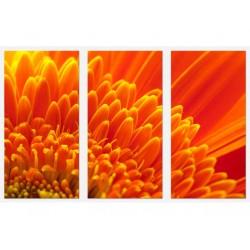 Set Tablou Dual-View Crizantema portocalie