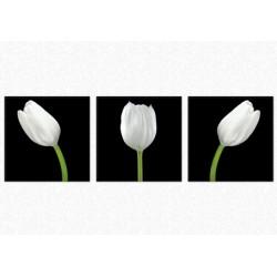 Set Tablou Dual-View Lalele albe