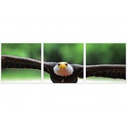 Set Tablou Dual-View Vultur