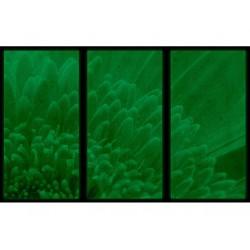 Set tablou 3 piese fosforescent Crizantema portocalie