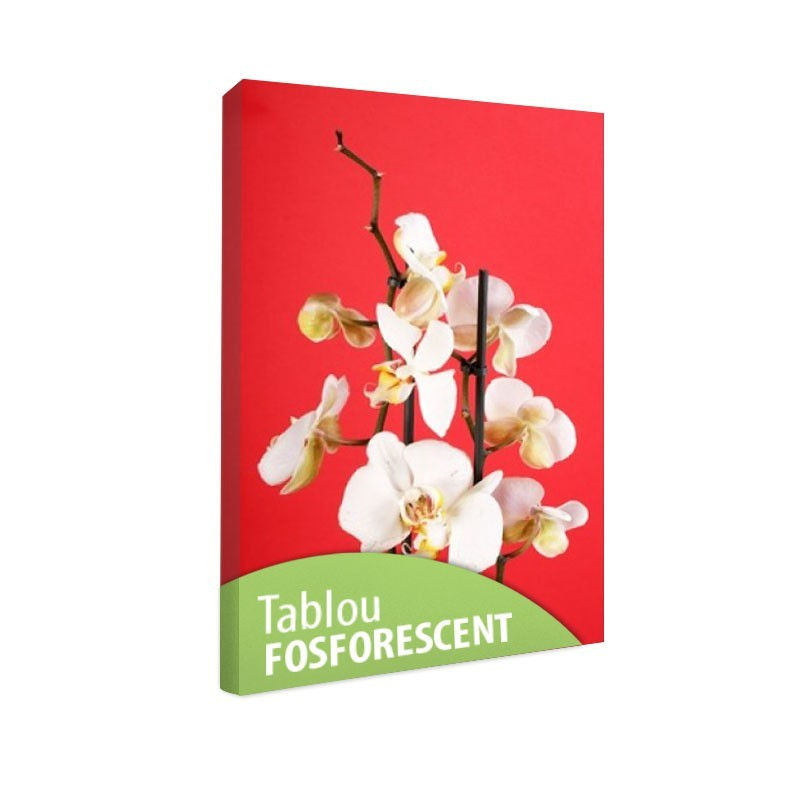 Tablou fosforescent Orhidee pe fond rosu