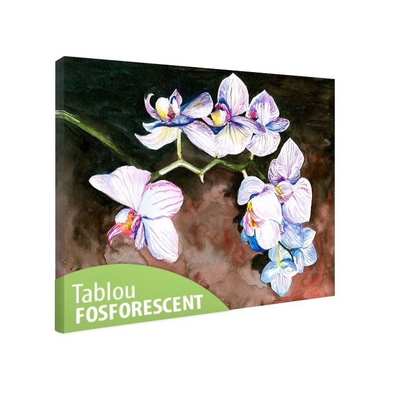 Tablou fosforescent Orhidee pictata