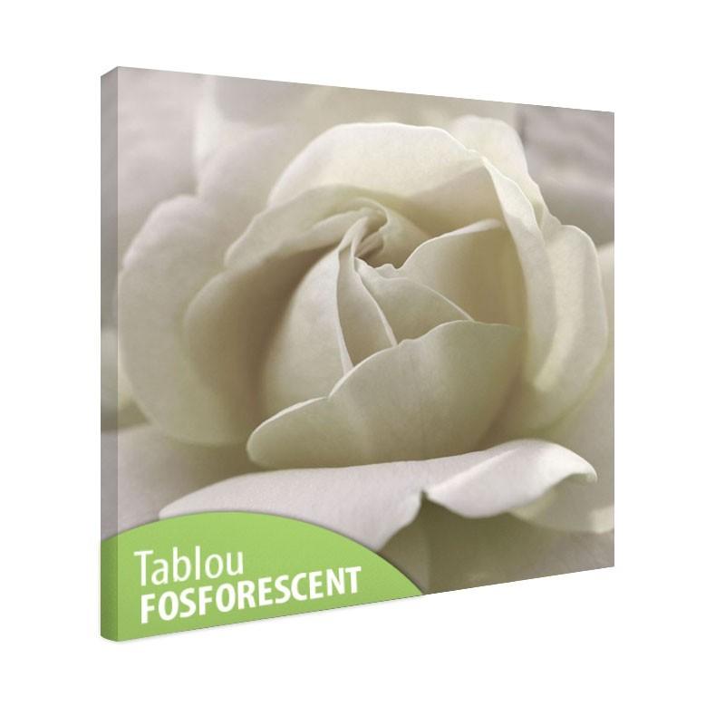 Tablou fosforescent Trandafir alb