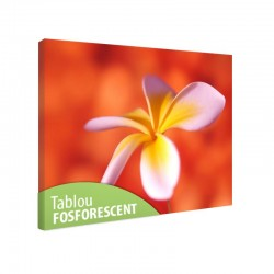 Tablou fosforescent Floare de frangipani