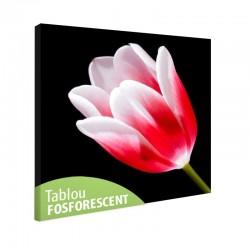 Tablou fosforescent Lalea rosie