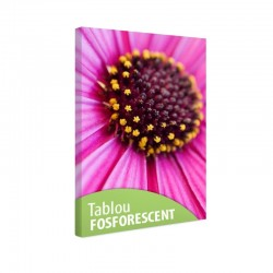 Tablou fosforescent Margareta roz