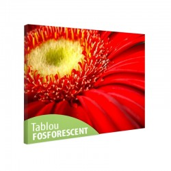 Tablou fosforescent Gerbera rosie