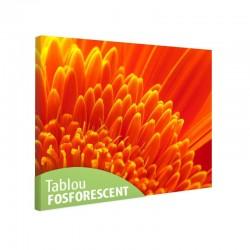 Tablou fosforescent Crizantema portocalie