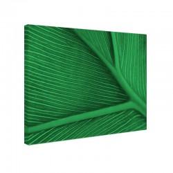 Tablou fosforescent Frunza verde