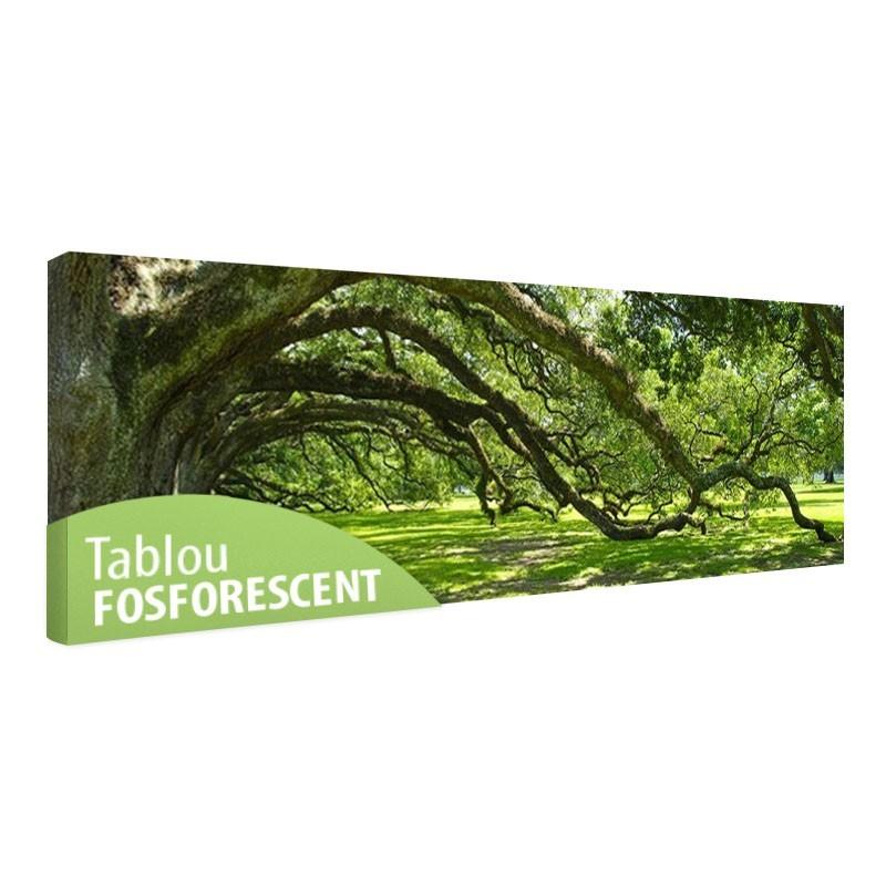 Tablou fosforescent Copaci batrani