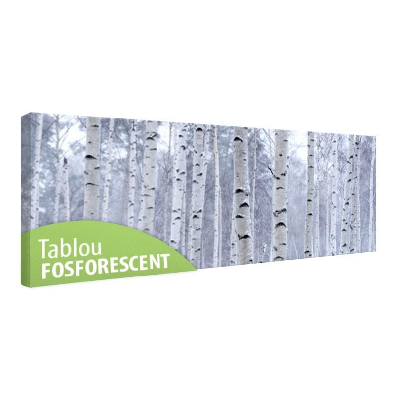 Tablou fosforescent Padure de mesteacan