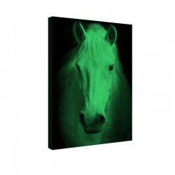 Tablou fosforescent Portret de cal alb