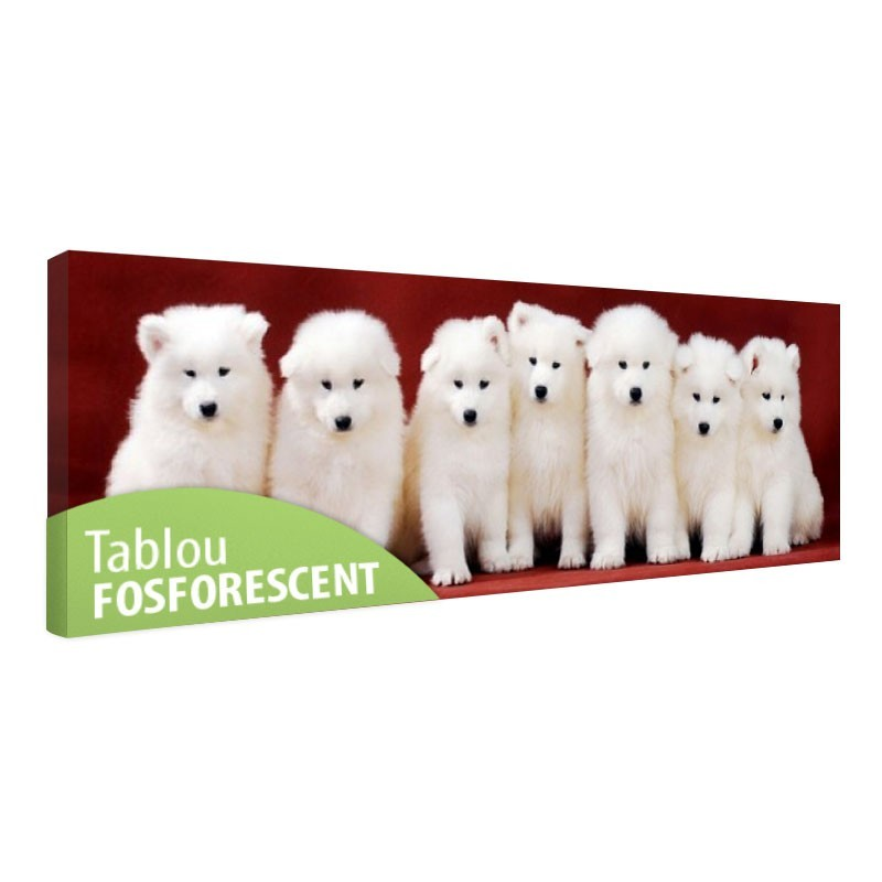 Tablou fosforescent Familia de catelusi Samoyed