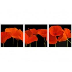 Set tablou fosforescent Maci portocalii, 3 piese 30x30 cm, canvas