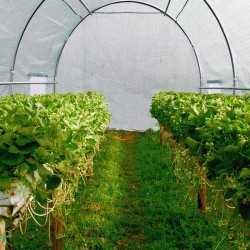 Sera tip tunel pentru gradina, 6x3x2 m, folie PE 140g/mp, filtru UV4, ferestre